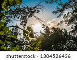 deciduous summer natural and... | Shutterstock . vector #1304526436