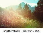 mountain meadow in sunny day.... | Shutterstock . vector #1304542156