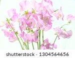 sweet pea flower | Shutterstock . vector #1304564656