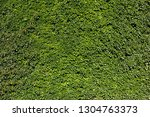 ivy  hedera . wall covered with ... | Shutterstock . vector #1304763373