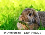 Cute Rabbit With Flower...