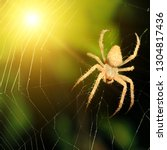 big brown spider in bright beam ... | Shutterstock . vector #1304817436