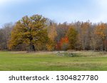 Autumn view of an old knotty oak tree and other autumn colored trees and bushes in Sweden