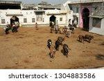 Nathdwara  Rajasthan  Gujrat ...