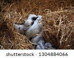 bjelovar  croatia   september ...   Shutterstock . vector #1304884066
