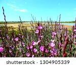 Purple Flowers In Ria Formosa...