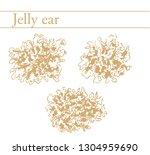 jelly ear  wood ear. edible... | Shutterstock .eps vector #1304959690