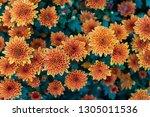 textures surface pattern design ... | Shutterstock . vector #1305011536