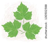 Illustration Of A Chaya Leaves...