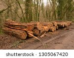 timber stack of recently felled ... | Shutterstock . vector #1305067420