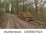 timber stack of recently felled ... | Shutterstock . vector #1305067423