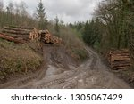 timber stack of recently felled ... | Shutterstock . vector #1305067429