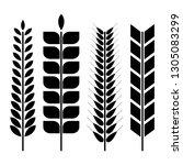 set of various spikelets of... | Shutterstock . vector #1305083299