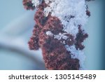 flora in winter with snowflakes ... | Shutterstock . vector #1305145489