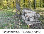 felling in forest. pile of wood. | Shutterstock . vector #1305147340