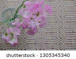 sweet pea flower | Shutterstock . vector #1305345340