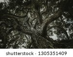from below of beautiful old and ... | Shutterstock . vector #1305351409