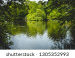 landscape of tranquil lake with ... | Shutterstock . vector #1305352993