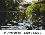 simple white spotty seagull... | Shutterstock . vector #1305353293