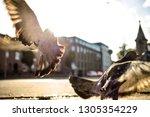 from below of pigeon in moment... | Shutterstock . vector #1305354229