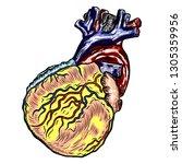 realistic human heart. vintage...   Shutterstock .eps vector #1305359956