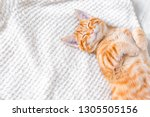 Stock photo ginger cat sleeping on soft white blanket cozy home and relax concept cute red or ginger little 1305505156