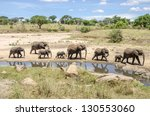 Family Of Elephants Going To...