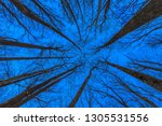 laying on back looking up at... | Shutterstock . vector #1305531556