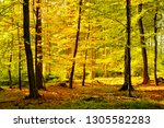 autumn  sunny forest of... | Shutterstock . vector #1305582283