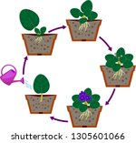 stages of vegetative... | Shutterstock .eps vector #1305601066