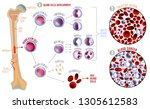 leukemia and normal blood under ... | Shutterstock .eps vector #1305612583