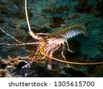 lobster on the seabed | Shutterstock . vector #1305615700