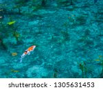 a transparent and beautiful... | Shutterstock . vector #1305631453