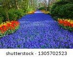 Keukenhof Famous  Colorful...