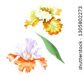 orange white iris floral... | Shutterstock . vector #1305802273