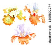 orange white iris floral... | Shutterstock . vector #1305802279