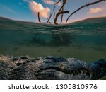 Alligator Saltwater Crocodile...
