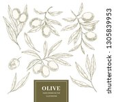 olive elements collection   Shutterstock .eps vector #1305839953
