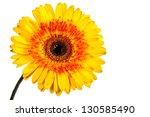Stock photo beautiful yellow flower isolated on white background 130585490