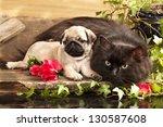 Stock photo pug pupp 130587608