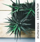 beautiful green plant on light...   Shutterstock . vector #1305876769
