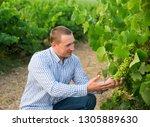 portrait of male winemaker... | Shutterstock . vector #1305889630