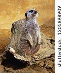 watcher of the zoo | Shutterstock . vector #1305898909