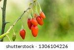 Goji berry  or wolfberry. ripe...