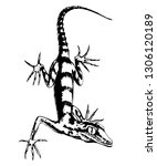 lizard  hand drawn vector... | Shutterstock .eps vector #1306120189
