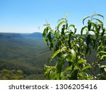 Verdant Eucalyptus Forest Over...