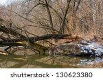 willow cut by sharp beaver teeth | Shutterstock . vector #130623380