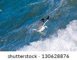 seagull   Shutterstock . vector #130628876