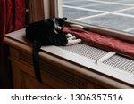 cat taking a nap on a heater | Shutterstock . vector #1306357516
