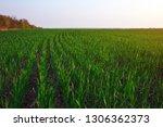 a green field during sunset as...   Shutterstock . vector #1306362373